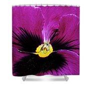 Fuchsia Pansy Shower Curtain