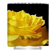 Full Bloom  Shower Curtain