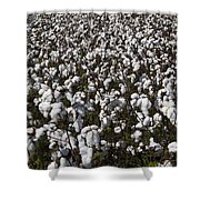 Full Frame Alabama Cotton Crop Shower Curtain