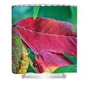 Full Spectrum Sumac Shower Curtain