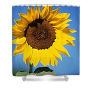 Full Sunflower Shower Curtain