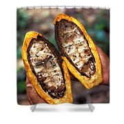 Fungal Infection Of Cacao Shower Curtain by Science Source