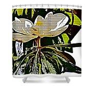 Funky Magnolia Shower Curtain