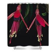Fuschia Flowers Atlantic Forest Shower Curtain