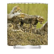 Fuzzy Babies Shower Curtain