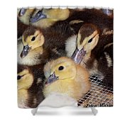 Fuzzy Ducklings Shower Curtain