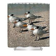Gaggle Of Gulls Shower Curtain