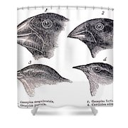 Galapagos Finches Shower Curtain