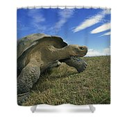 Galapagos Giant Tortoise Geochelone Shower Curtain