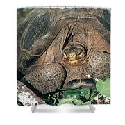 Galapagos Giant Tortoise Shower Curtain