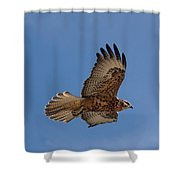 Galapagos Hawk Flying Shower Curtain