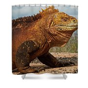 Galapagos Land Iguana Conolophus Shower Curtain