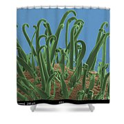 Galium Aparine, Sem Shower Curtain
