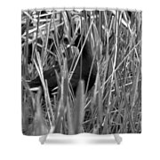 Gallinule In The Grass Shower Curtain