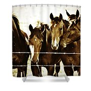 Galloping Brothers  Shower Curtain