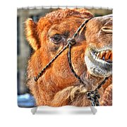 Gangsta Grillin This Camels Chillin Shower Curtain