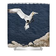 Gannet Landing Shower Curtain