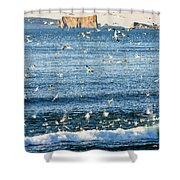 Gannets In Flight And Perce Rock Shower Curtain