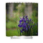 Garden Blue Irises Shower Curtain