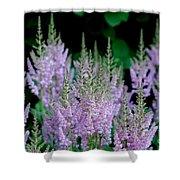 Garden Forest Shower Curtain