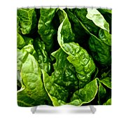 Garden Fresh Shower Curtain by Susan Herber