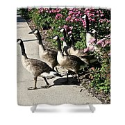 Garden Geese Parade Shower Curtain