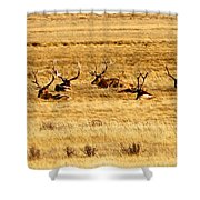 Garden Of Elk Shower Curtain