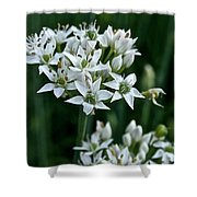 Garlic Chive Blooms Shower Curtain