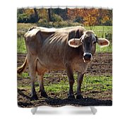Gasping Cow Shower Curtain