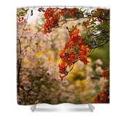 Gathering Of Radiance Shower Curtain