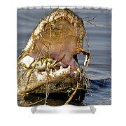 Gator Grabs Lunch Shower Curtain