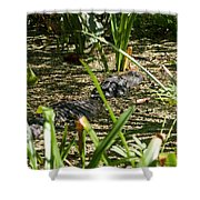 Gator Sunning Shower Curtain