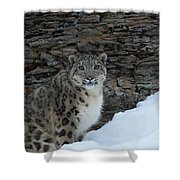 Gaze Of The Snow Leopard Shower Curtain