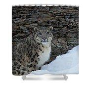 Gaze Of The Snow Leopard Shower Curtain