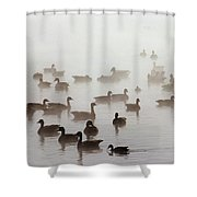 Geese And Ducks In A Placid Lake Shower Curtain