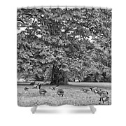 Geese By The River Shower Curtain by Bill Cannon