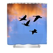 Geese Silhouetted At Sunset - 1 Shower Curtain