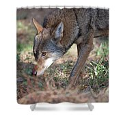 Gentle Wolf Shower Curtain