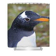 Gentoo Penguin Head Shot Shower Curtain