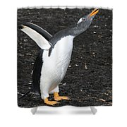 Gentoo Penguin With Something To Say Shower Curtain