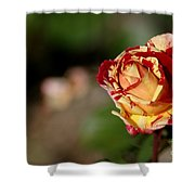 George Burns Rose Shower Curtain
