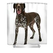 German Pointer Shower Curtain