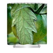 Getting There Shower Curtain by Chris Berry