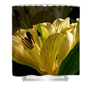Ghosted Frecia Shower Curtain