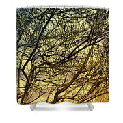 Ghosts Of Crape Myrtles Shower Curtain