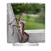 Giant Assassin Bug Shower Curtain