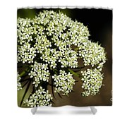 Giant Buckwheat Flower Shower Curtain