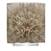 Giant Dandelion Shower Curtain