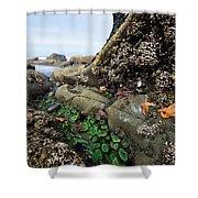 Giant Green Sea Anemone Anthopleura Shower Curtain