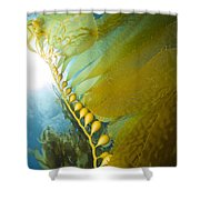 Giant Kelp, Catalina Island, California Shower Curtain